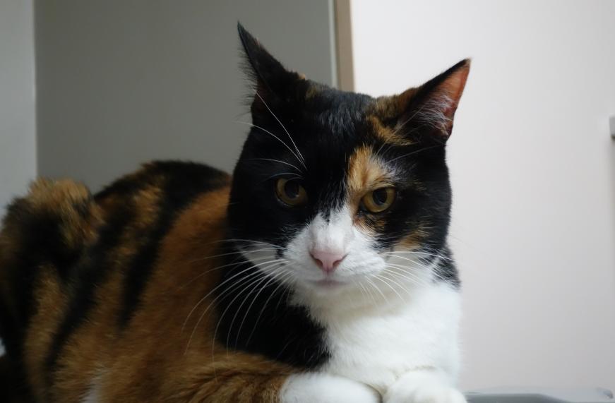 世界一かわいい猫の写真です